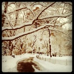 madison square park makes blizzards beautiful