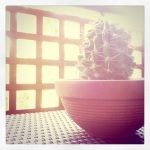 a wee cactus on my terrace in scottsdale, az