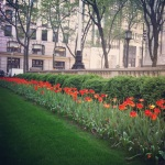 spring at the New York Public Library...